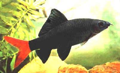 f ne les achetez plus 183 l aquarium de cab65