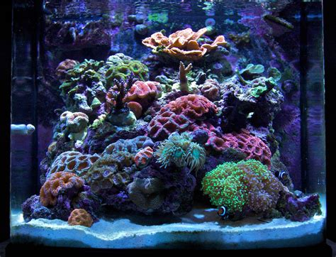 mini gbr 2009 featured nano reefs featured aquariums monthly featured nano reef aquarium