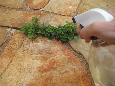 une astuce naturelle pour se d 233 barrasser des mauvaises herbes c est fait maison