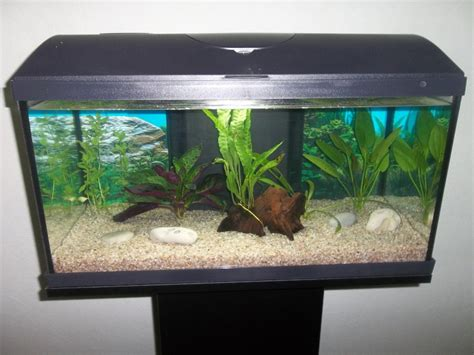 quel poissons pour mon aquarium de 54 litres