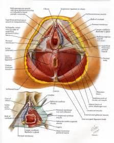 pelvic expert