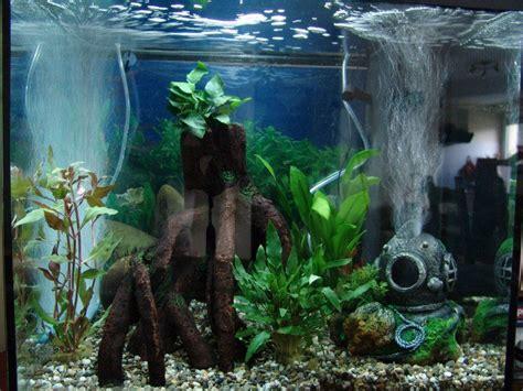 nouvel aquarium toujours vide mon premier aquarium