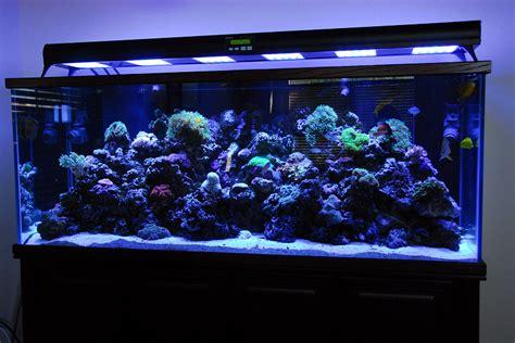 ledbot led lighting for fish tank aquarium