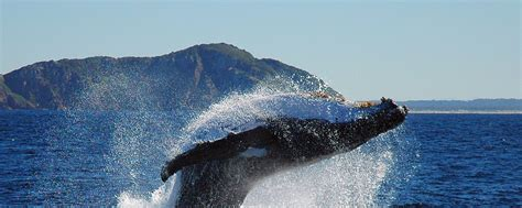 Whale Watching Boat Tours San Diego Ca by Harbor Tours Whale Watching Boat Charters San Diego