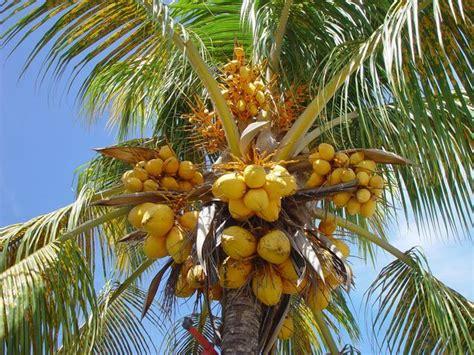 y a plus de grands que des cocotiers y a plus de trop chaud