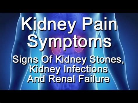 Kidney Pain Symptoms  Signs Of Kidney Stones, Kidney. Lbbb Signs. Glass Signs. Stept Signs. 19 April Signs. Gaya Hidup Signs. Wristband Signs. Sleep Deprivation Signs. Funny Signs