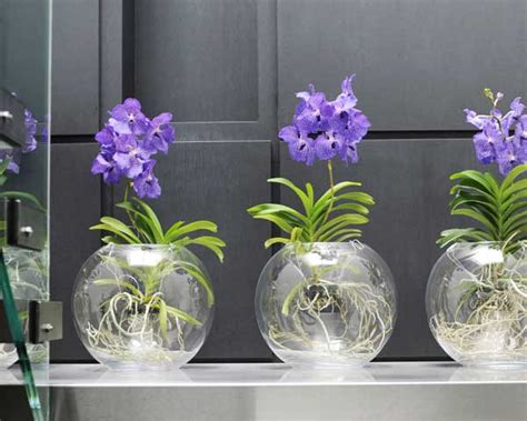 comment conserver une orchid 233 e vanda emilia oliverio
