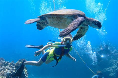 Maui Boat Tours by Boat Tours On Maui Hawaii