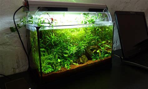 aquarium naturel plant 233 20 litres anp