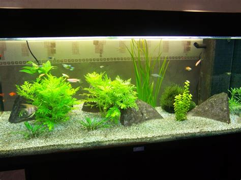 demarrage aquarium d eau douce quot vos conseil quot