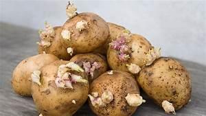 Kartoffeln Und Zwiebeln Lagern : keimende kartoffeln kann man sie noch essen ~ Markanthonyermac.com Haus und Dekorationen