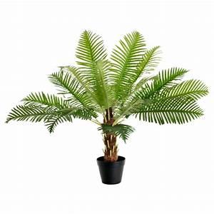 Palmen Für Die Wohnung : palmenarten als zimmerpflanzen winterharte exotische l sungen ~ Markanthonyermac.com Haus und Dekorationen