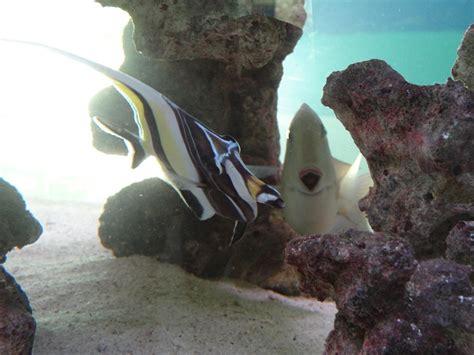 l aquarium de l 238 le maurice d 233 couvrez mon 238 le maurice