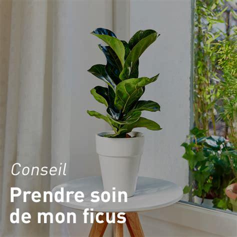 plantes de bureau sans soleil plantes de bureau sans soleil with plantes de bureau sans