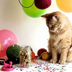 12 Homemade Cat Treats and Toys Your Kitten Will Love ...