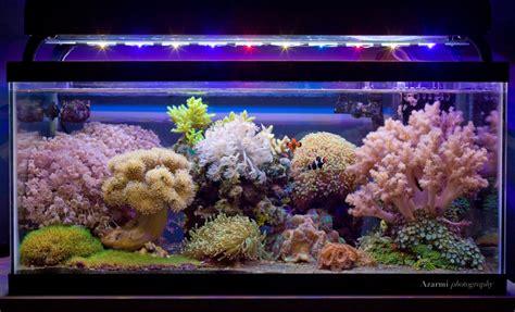 Reef Builders Pick Five Additional Amazing Nano Reefs. Soapstone Countertops. Sherwin Williams Functional Gray. Landscaping Seattle. Shower Backsplash. Johnson Hardware Omaha. Bathroom Medicine Cabinet. Semi Recessed Sink. Gold Medal Pools