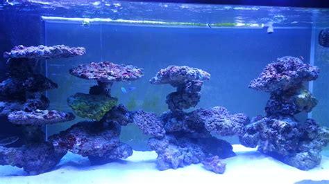 reef tank aquascaping on pvc