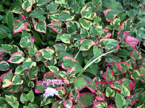 plantes d ombre exterieur atlub