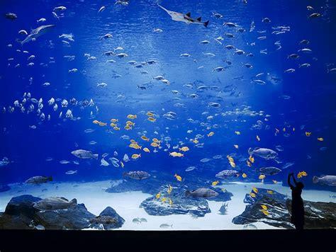 emmanuel chaussade the aquarium