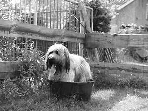 Der Abfluss Stinkt Was Tun : frag mutti was tun wenn der hund stinkt hilfe mein hund m ffelt ~ Markanthonyermac.com Haus und Dekorationen