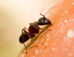Hilft Mehl Gegen Ameisen : was hilft gegen ameisen im garten tipps ~ Whattoseeinmadrid.com Haus und Dekorationen