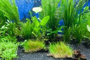 aquarium plants fish n tips aquatic plants 2017 fish tank maintenance