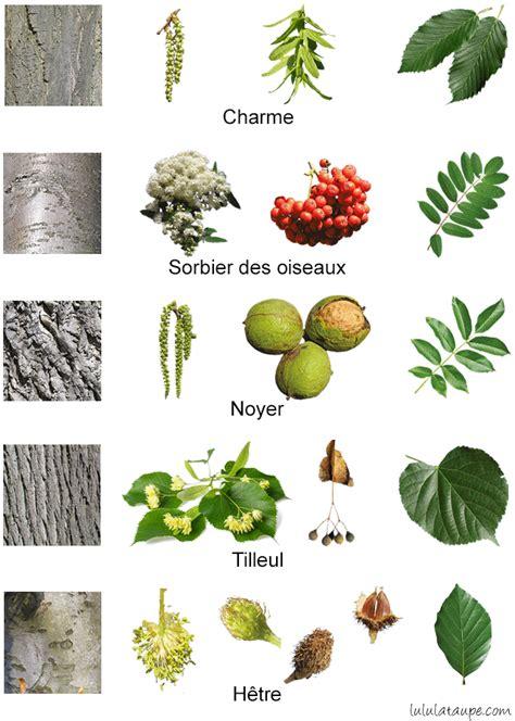les arbres de la for 234 t fleurs fruits 233 corce et feuilles botanique les arbres