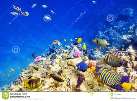 monde sous marin avec des coraux et des poissons tropicaux photo stock image 52503683