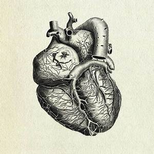 Love in the Digital Age • Heart anatomy by Vintage ...