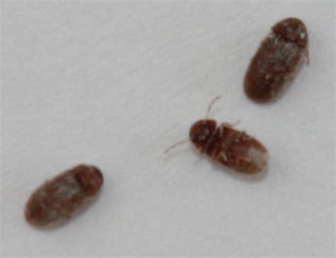 identification insecte salle de bain notre planete info