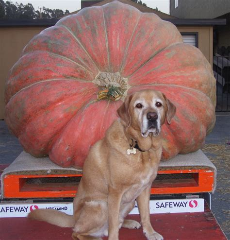 100 pumpkin for pets diarrhea constipation and