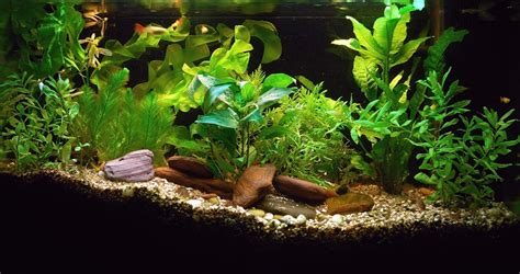 live aquarium plants to add beautifully alive detail household tips highscorehouse