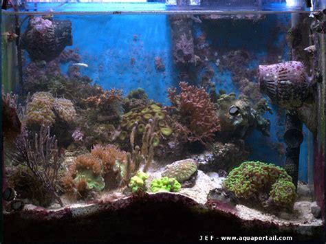 nano aquarium r 233 cifal de 100 litres en m 233 thode dsb