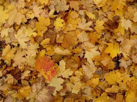couleurs d automne suite et peut 234 tre fin chez mammilou