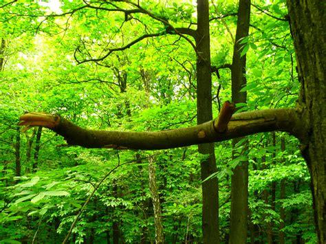 branche d arbre cass 233 e dans la for 234 t benoit theodore flickr