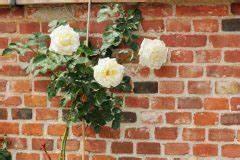 Kletterrosen Richtig Pflanzen : rosenbogen bepflanzen so machen sie 39 s richtig ~ Markanthonyermac.com Haus und Dekorationen