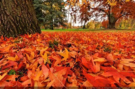tapis de feuilles mortes 5 bois de vincennes