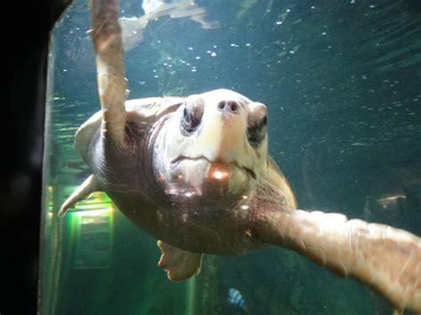 une otarie picture of aquarium de noirmoutier ile de noirmoutier tripadvisor