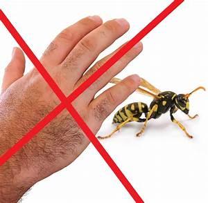 Was Wespen Nicht Mögen : insekten wehe dem der mit der hand nach wespen schl gt welt ~ Markanthonyermac.com Haus und Dekorationen