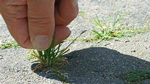 Alternative Zu Gras Garten : unkraut vernichten 10 tipps als alternativen zu unkrautvernichter ~ Markanthonyermac.com Haus und Dekorationen
