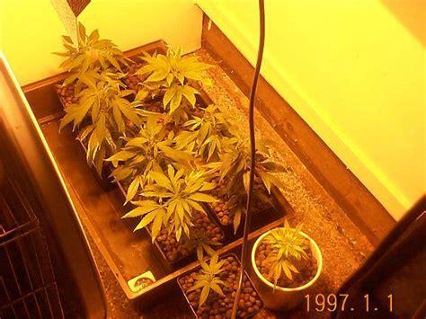 cultiver du cannabis 224 l int 233 rieur