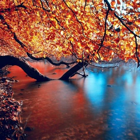 10 Most Popular Autumn Hd Wallpapers 1080p Full Hd 1080p