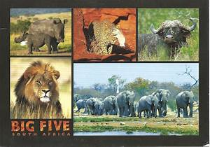 MY POSTCARD-PAGE: SOUTH AFRICA ~ The Big Five