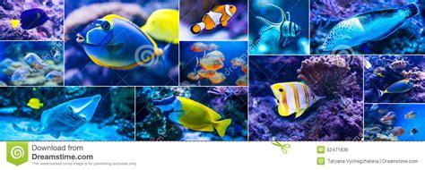 poissons color 233 s en monde d eau de mer d aquarium photo stock image 52471836