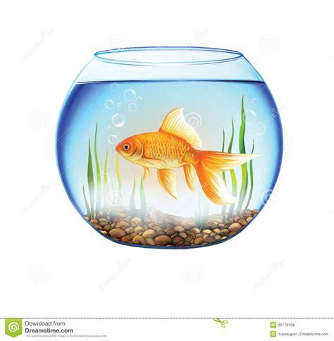 les poissons d or dans un aquarium rond poissons roulent images libres de droits image 29776159