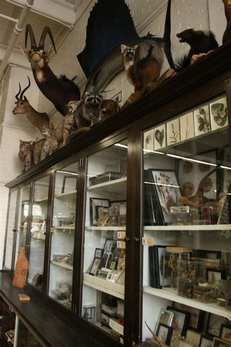 what is a cabinet of curiosities