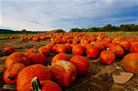 Pumpkin Patch Rochester New York by 100 Closest Pumpkin Patch To Seattle Weekend Escape