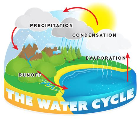 Water Cycle Creationcom
