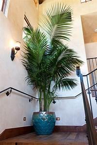 Palmen Für Die Wohnung : die besten 25 zimmerpflanze palme ideen auf pinterest innen palmen gro e zimmerpflanzen ~ Markanthonyermac.com Haus und Dekorationen