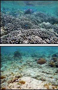 Coral Reefs Show Signs of Recovery | St. Thomas Source